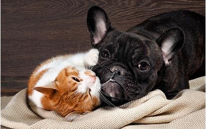Animaux de compagnie - Des solutions de garde pas si bêtes...