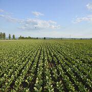 PesticidesLes Sages sanctionnent une concertation locale biaisée