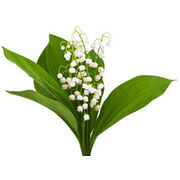 1er maiUne fleur pour les vendeurs