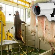 AbattoirsLe contrôle vidéo mis à mort ?