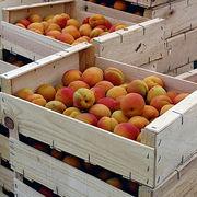 Alimentation - L'abricot bientôt hors circuit court ?
