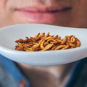 Aliments à base d'insectesBientôt dans nos assiettes?