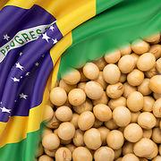 Amazonie en feuPeut-on éviter le soja brésilien ?