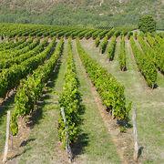 Arnaques sur les vins de BordeauxRoger Geens condamné à payer 470 000 euros