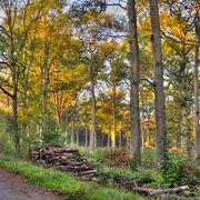 ChauffageEt si vous achetiez une forêt pour le bois de chauffage ?