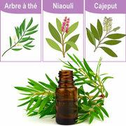 Compléments alimentaires - Attention aux huiles essentielles d'arbre à thé, de niaouli et de cajeput