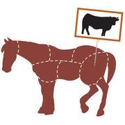 Fraudes à la viande de chevalLe procès s'ouvre enfin