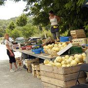 Fruits et légumesLes dessous peu ragoûtants des ventes sauvages