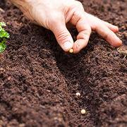 JardinageLes semences paysannes restent autorisées pour les amateurs