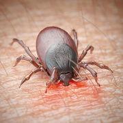 Maladie de Lyme - Polémique sur les centres de référence