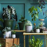 Plantes d'ornementUne meilleure information sur les risques toxiques