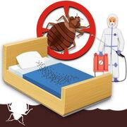 Punaises de lit (infographie) - Vos solutions pour en venir à bout