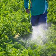 Trafic de pesticidesLes auteurs condamnés à de lourdes amendes
