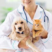 VétérinairesLes différences de tarifs entre régions se creusent