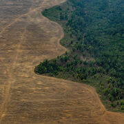 Zéro déforestationEncore du chemin à parcourir