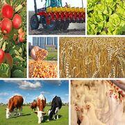 Projet de loi agriculture et alimentationLa grande (dés)illusion !