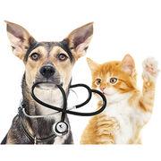 Satisfaction assurances pour chiens et chats