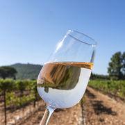 Vins des Côtes-du-Rhône