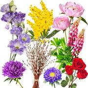Achat responsableÀ chaque saison, ses fleurs
