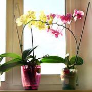 JardinageFaire (re) fleurir les orchidées