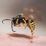 Moustiques, tiques, guêpes…Que faire en cas de piqûre