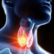 Thyroïde - Quand faut-il faire des examens ?