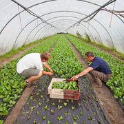 Aliments bioZéro pesticide, vraiment ?