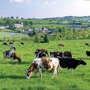 Crise agricoleLes modes d'élevage qui résistent