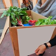Fruits et légumesÀ l'heure des circuits courts