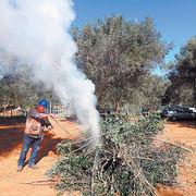 Huiles d'olive des marchés provençauxEncore trop d'arnaques