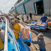 Pêche durableAu Guilvinec, le chalut est roi