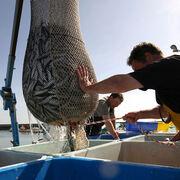 Pêche durableMieux pêcher et mieux acheter pour sauver l'océan