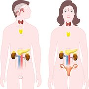Perturbateurs endocriniensNotre santé en danger