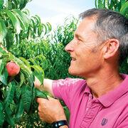 Pesticides dans les fruitsLes difficultés du passage au bio