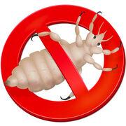 Produits anti-pouxComment se débarrasser des poux ?
