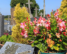 Obsèques - Pompes funèbres