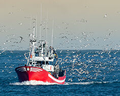 Pêche durable